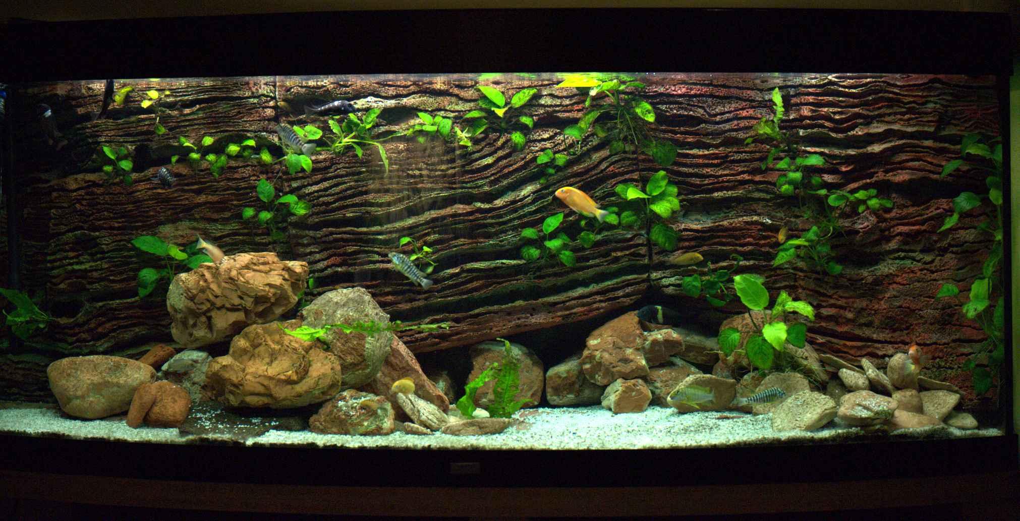 Pin sfondo 3d acquario sicil animali in vendita a for Acquario vendita