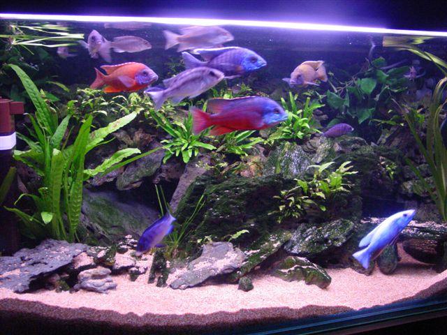 56 55 kb for Acquario per tartarughe piccole
